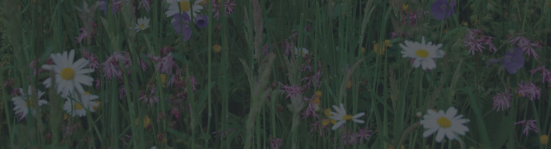 John chambers wildflower seed uk largest supplier of british wildflower turf izmirmasajfo